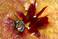 Martin Heigan Macro Stapeliad flower photography