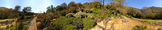 Martin Heigan Botanical Aloe QTVR Panorama